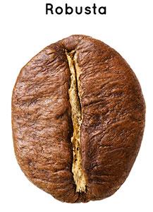 Robusta-Bohnen